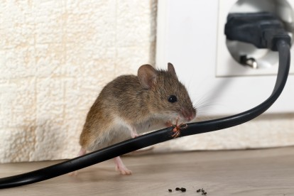 Pest Control in Foots Cray, DA14. Call Now! 020 8166 9746
