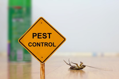 Pest Contol in Foots Cray, DA14. Call Now 020 8166 9746